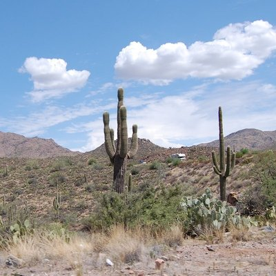 Cacti as far as the eye can see.