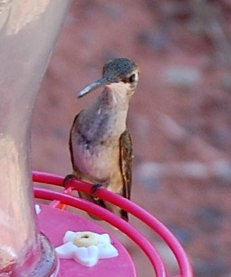 Hummingbird on feeder.