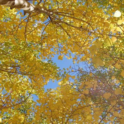 View skywards through trees.