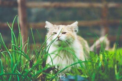 Rummy Cat