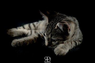 Cat in the studio