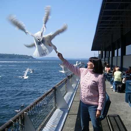 Feeding the seagulls in Seattle, Washington