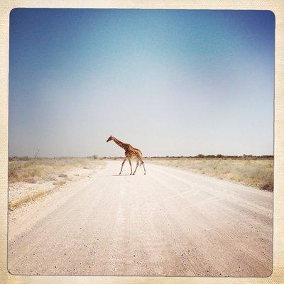 Giraffe (Namibia)