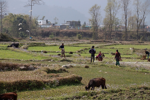 large_Nepal_262.jpg