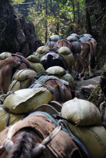 Packhorses