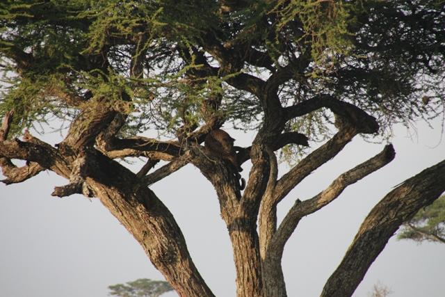 large_Tansania___Sansibar_159.jpg
