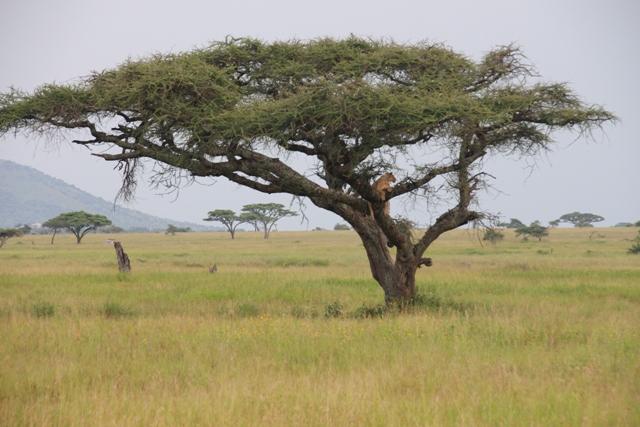 large_Tansania___Sansibar_246.jpg