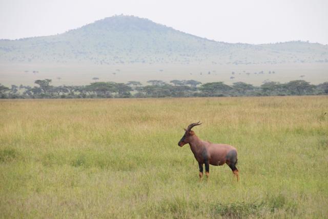 large_Tansania___Sansibar_259.jpg