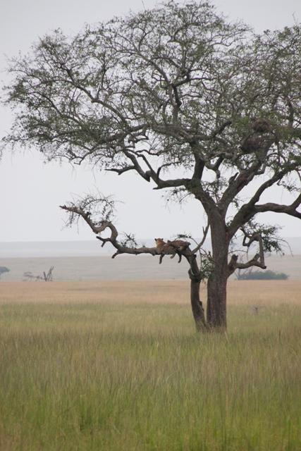 large_Tansania___Sansibar_272.jpg