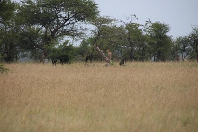 large_Tansania___Sansibar_276.jpg