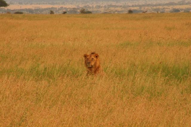 large_Tansania___Sansibar_345.jpg