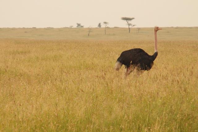 large_Tansania___Sansibar_372.jpg