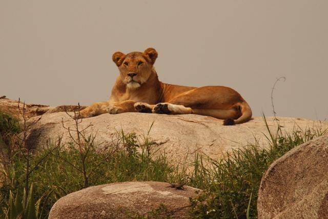 large_Tansania___Sansibar_439.jpg