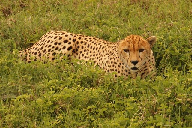 large_Tansania___Sansibar_495.jpg