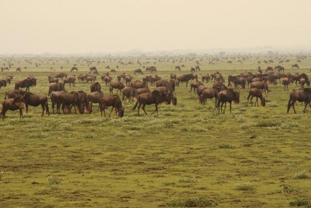 large_Tansania___Sansibar_531.jpg