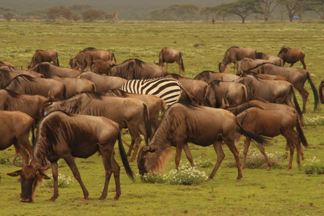 large_Tansania___Sansibar_536.jpg