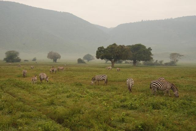 large_Tansania___Sansibar_540.jpg