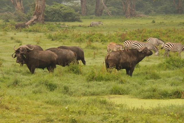 large_Tansania___Sansibar_546.jpg