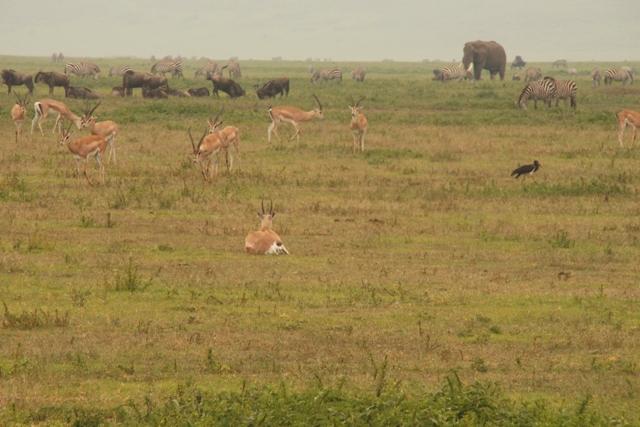large_Tansania___Sansibar_586.jpg