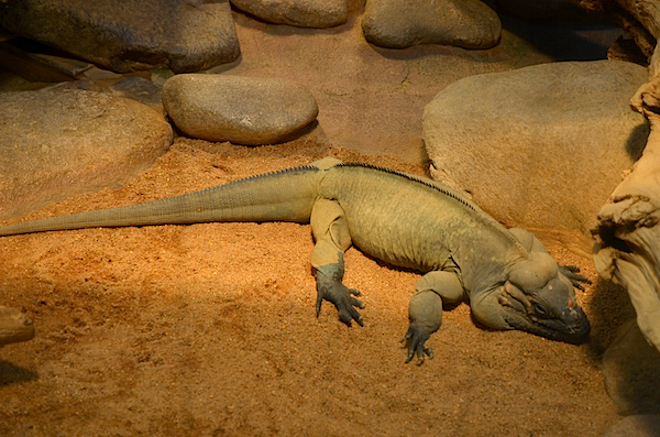 One of the many reptiles at Stuttgart Zoo