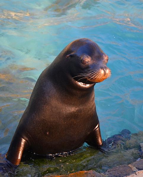 A sea lion cub