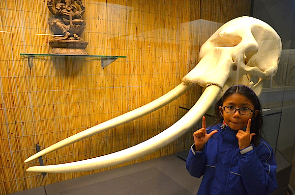 Not a Mammoth but still impressive