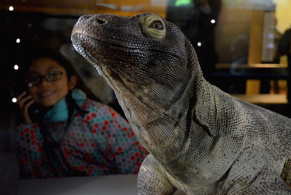 With Komodo dragon.