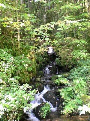 6Black_Forest__1_.jpg