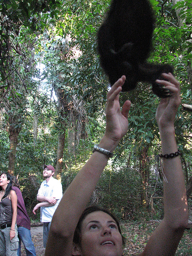 Ape Handling