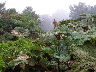 Cloud Forest, Mt. Poas