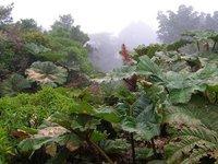 Cloud Forest, Mt. Poas