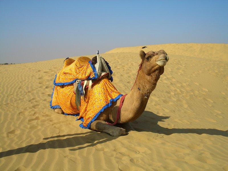 Sam Wüste und Dromedar 01
