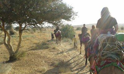 Camel_safari.jpg