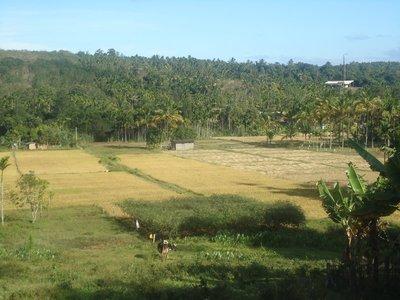 Day 4. Tribal Village Rice Fields