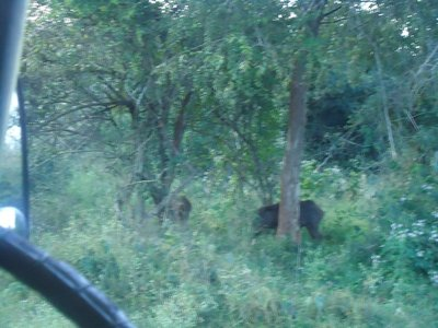 Day 5. Jeep Safari
