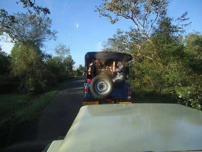 Day 5. Mudumalai National Park Jeep Safari
