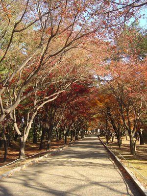Gyeongju autumn leaves