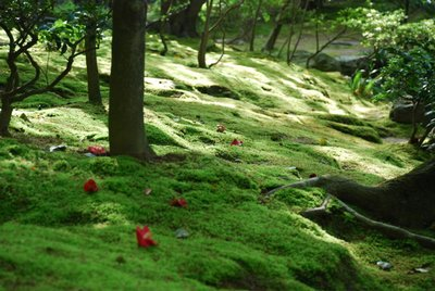 Kyoto- temple -flowers on the moss