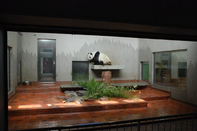 Tokyo-Ueno Zoo panda