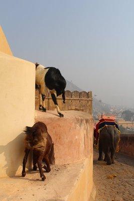 Jaipur (114)