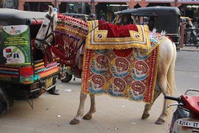 Jaipur__35_.jpg