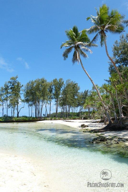 palms and beach tonga