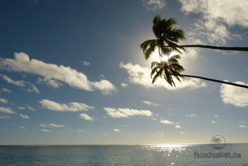 palms ocean south pacific cook islands