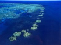 Bait_Reef.jpg