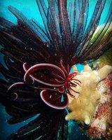 more_coral.jpg