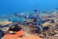 more_fish.jpg