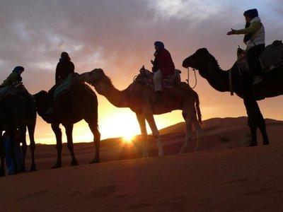 desert camel trekk in Morocco