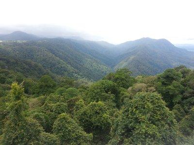 Dorrigo National Rainforest