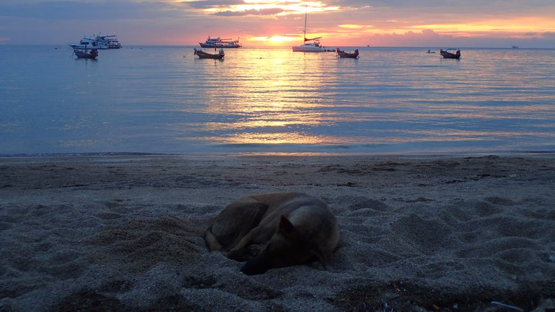 Sleeping Dog Sunset