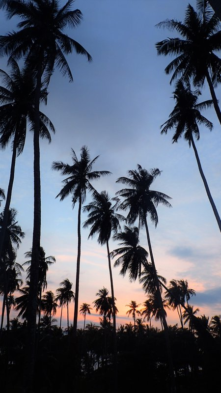 Palm Trees, Koh Mak